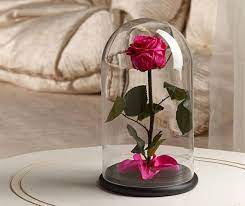 Beauty and the Beast rose: Best gift to your loved one